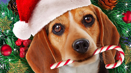 Shelby the Dog Who Saved Christmas Only On Super Channel