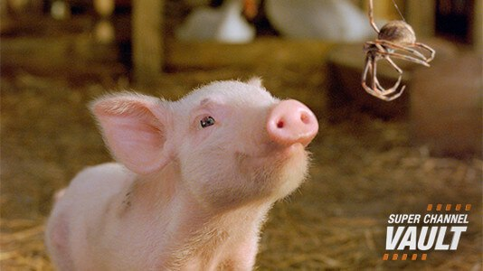 Charlotte's Web Premieres Jun 04 10:00AM | Only on Super Channel