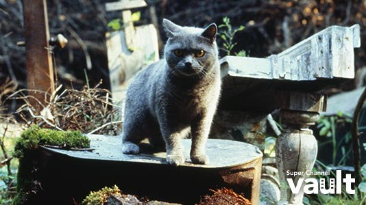 Pet Sematary Premieres Apr 05 8:05PM | Only on Super Channel